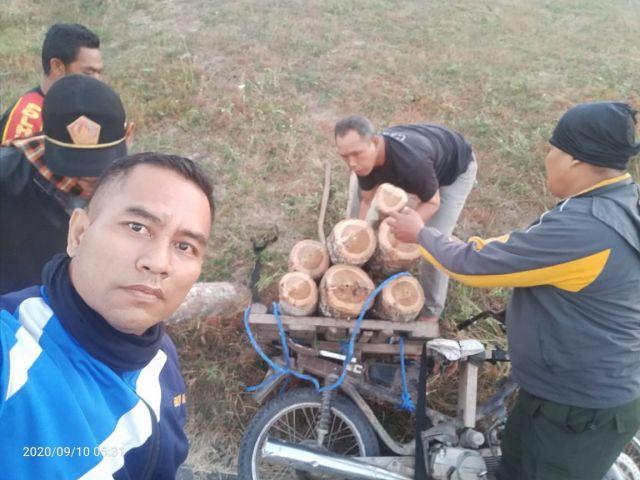 Polisi Hutan Perhutani Divre Jatim Tangkap Pelaku Pencuri Kayu Jati