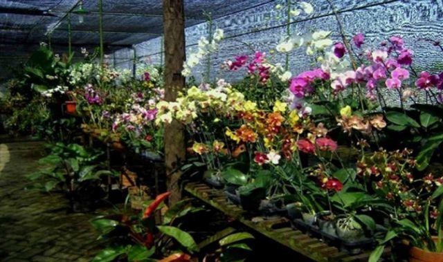 Eks Lokalisasi Surabaya Siap di Bangun Wisata Kebun Anggrek